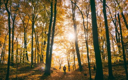 Marche en Sa présence cet automne